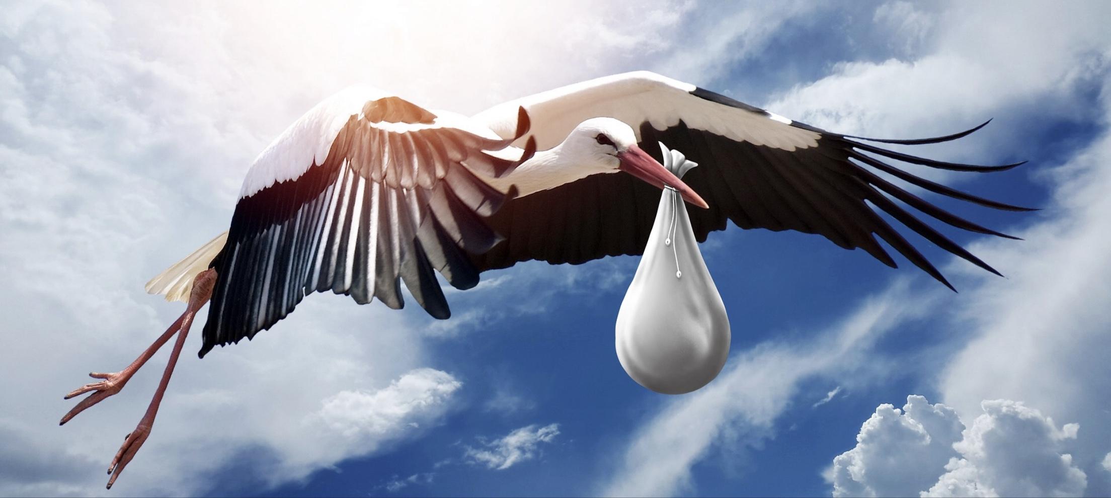 Stork Fertility